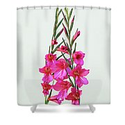 Gladioli Byzantinus In Love Shower Curtain