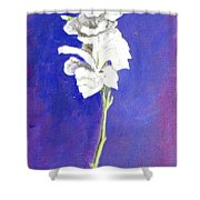 Gladiolus 1 Shower Curtain