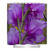 Gladiolus Rear View Shower Curtain