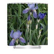 Glads Shower Curtain