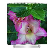 Gladys Blooms In A Blueberry Bush Shower Curtain