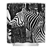 Glamorous In Black And White Shower Curtain
