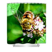 Glass Wings Shower Curtain