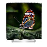 Glasswing Butterfly Iridescence  Shower Curtain