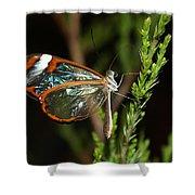 Glasswinged Butterfly Shower Curtain