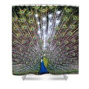 Glassy Peacock  Shower Curtain