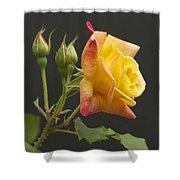 Glenn's Rose Shower Curtain