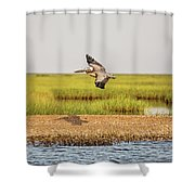 Gliding Over A Shell Island Shower Curtain