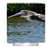 Gliding Pelican Shower Curtain