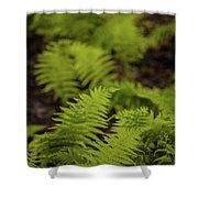 Glimmering Ferns Shower Curtain