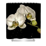 Glissoning Orchids Shower Curtain