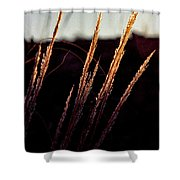 Glistening Grass Shower Curtain