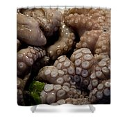 Glistening Octopus For Sale Shower Curtain