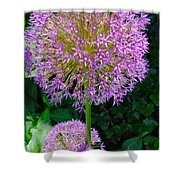 Globe Thistle Flowers Shower Curtain