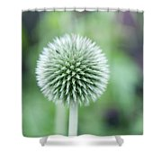 Globe Thistle Shower Curtain