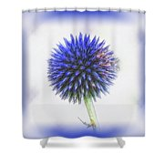 Globe Thistle With Vignette Shower Curtain