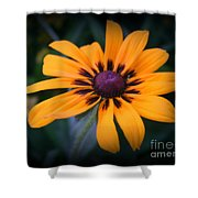 Gloriosa Daisy Shower Curtain