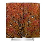 Glorious Autumn Shower Curtain