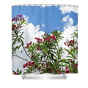 Glorious Fragrant Oleanders Reaching For The Sky Shower Curtain