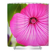 Glorious In Pink Shower Curtain