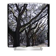 Glorious Live Oaks With Framing Shower Curtain
