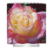 Glorious Pink Rose Shower Curtain