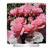Glorious Pink Roses Shower Curtain
