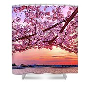 Glorious Sunset Over Cherry Tree At The Jefferson Memorial  Shower Curtain