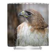Glory Of It Shower Curtain