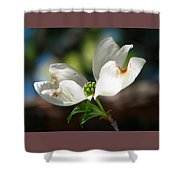 Glory Of Spring Shower Curtain