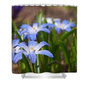 Glory Of The Snow 2 Shower Curtain