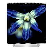 Glory Of The Snow Blue Giant Shower Curtain