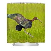 Glossy Ibis Shower Curtain