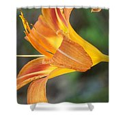 Glow Of A Lily Shower Curtain