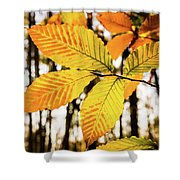 Glowing Beech Leaf Branch Shower Curtain