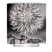 Glowing Dahlia Shower Curtain
