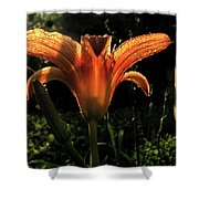 Glowing Day Lily Shower Curtain