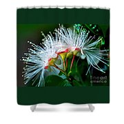 Glowing Needles Shower Curtain