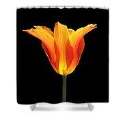 Glowing Orange Tulip Flower Shower Curtain