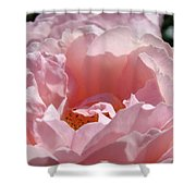 Glowing Pink Rose Flower Giclee Prints Baslee Troutman Shower Curtain