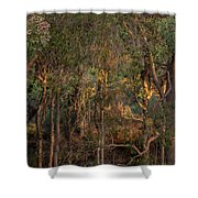 Glowing Trees Shower Curtain