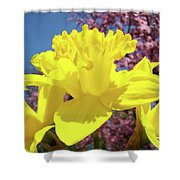 Glowing Yellow Daffodils Art Prints Pink Blossoms Spring Baslee Troutman Shower Curtain