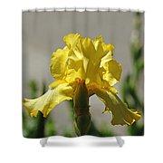Glowing Yellow Iris Shower Curtain