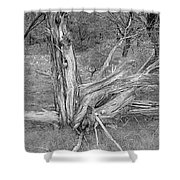 Gnarled Cedar Stump Shower Curtain