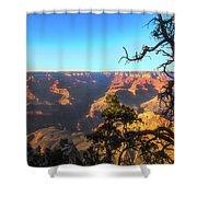 Gnarled Juniper On Canyon Rim Shower Curtain