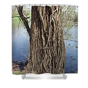 Gnarly Tree 2 Shower Curtain