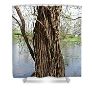 Gnarly Tree 3 Shower Curtain
