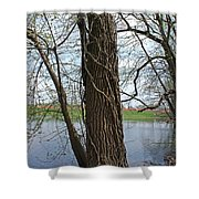 Gnarly Tree 4 Shower Curtain