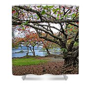 Gnarly Trees Of South Hilo Bay - Hawaii Shower Curtain