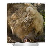 Gnaw Shower Curtain